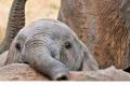 코끼리 좋아하시나요