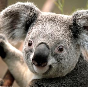 귀여운 동물사진