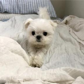 침대에서 너와 함께할때 가장 행복했다