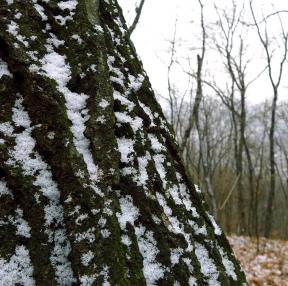 ㅏ래기는 내리던날 인근 숲속