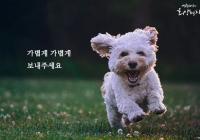 """[감동] 법륜스님의 희망편지 """"사랑하던 반려견이 떠났어요"""""""