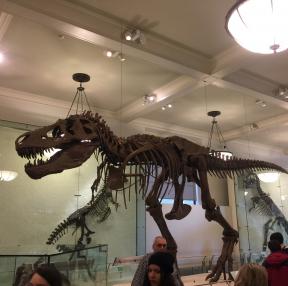 뉴욕 자연사박물관