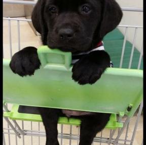 카트에 앉아 장보는 강아지