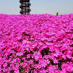 사흥갯골생태공원