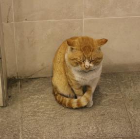 고양이 보고가세요