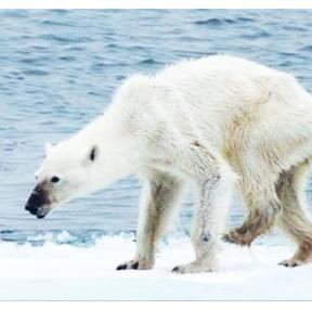 어제는 북극곰의 날이었다고 합니다