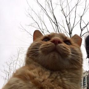 고양이가 세상을 지배한다