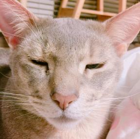 고양이입니다