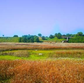대구 갈대밭