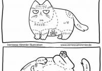 고양이의 종류
