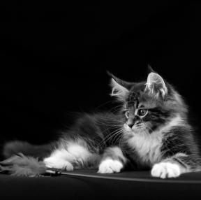 저희집 바탕화면에 사는 고양이 임니다