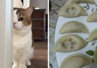 만두는 고양만두죠!