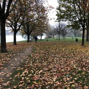 흔한 비엔나 동네 공원입니다.