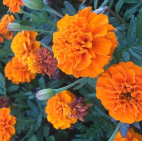 노호오랑 꽃