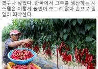 한국과 중국의 고추 농사.jpg