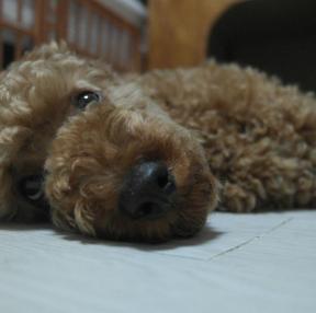 폰카 강아지