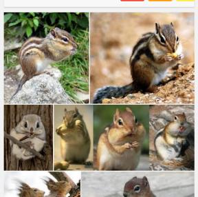 구글검색 다람쥐와 람쥐의 차이점