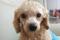 다메다메 강아지 리믹스