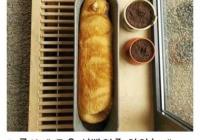 잘 구운 식빵인줄 알았지만...