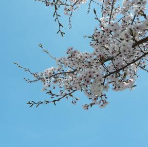 봄봄봄 봄이왔네요