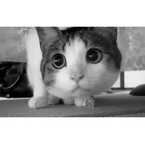 귀여운 고양이 움짤 이네요 :)