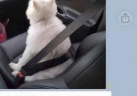 조수석 강아지 ㅋㅋ