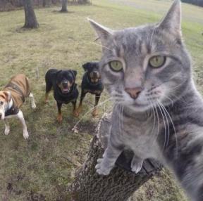 사람보다 셀카 잘 찍는 고양이
