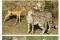 동물의왕국 쉬는 시간