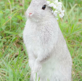 귀여운 토끼