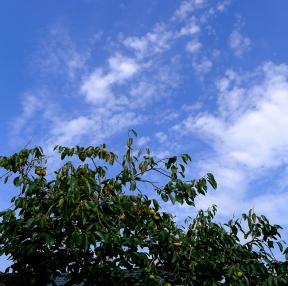 파란 하늘과 구름