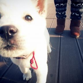 귀여운 강아지