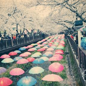 봄의 군항제