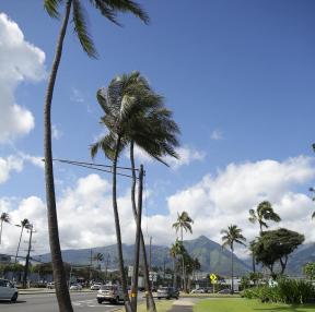하와이입니다