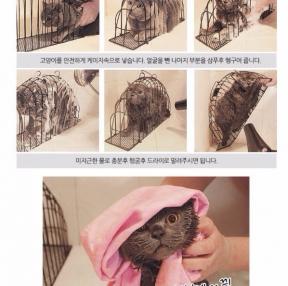 고양이 목욕시키기