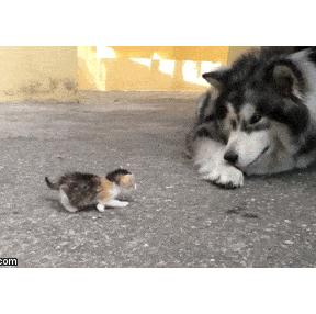 새끼고양이