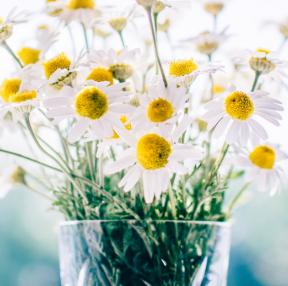 바탕화면용 꽃 사진입니다