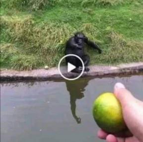 원숭이를 낚는 방법