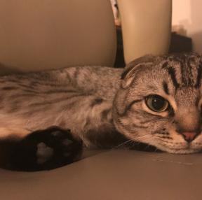 우리집 고양이 2