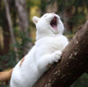 고양이 3장