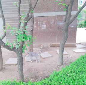 집앞에 고양이