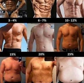 다이어트. 체지방.