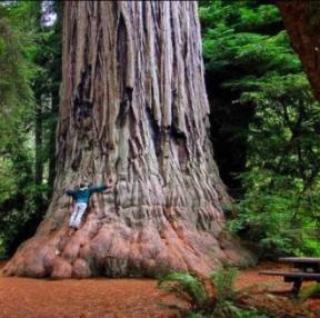 세상에서 가장 큰 나무