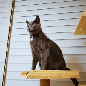 저희집 고양이(2)
