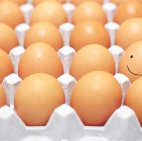 요즘핫한 달걀