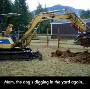 엄마, 멍멍이가 또 마당에 구멍파!