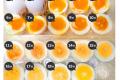 삶은달걀학 개론