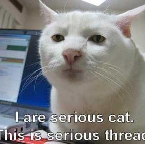 진지한 고양이