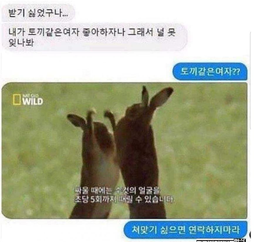 토끼 강민선.JPG