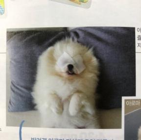 귀여운 아로마테라피 강아지..