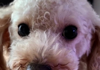 강아지 롤린